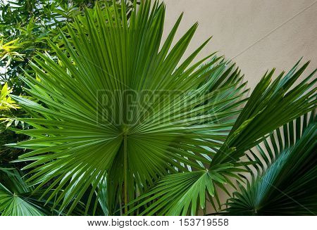 The perfect symmetry of a palm tree leaf