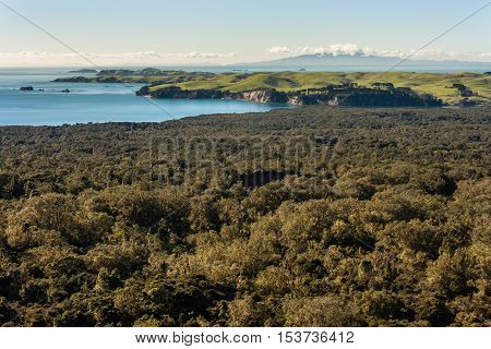 aerial view of New Zealand coastline with tropical rainforest