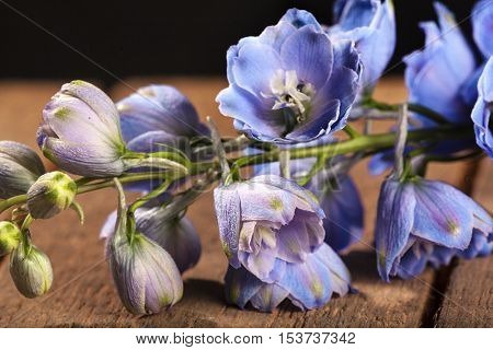 Macro photo of a blue Delphínium flower