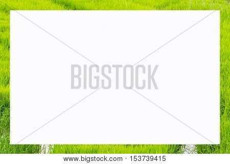 picture frame form green rice fields , object