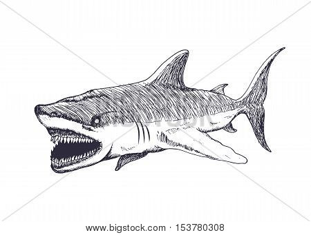 Angry shark isolated on white background. Hand drawn vector illustration