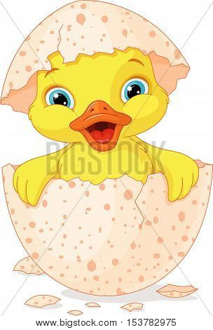 Duckling hatched from eggs on a white background