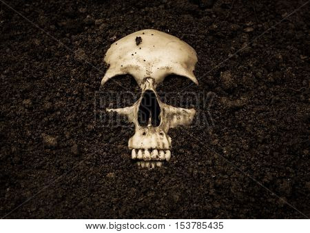 Human skull in soil,Horror background for Halloween concept and book cover ideas