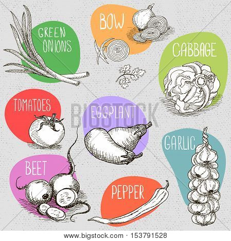 Set of stickers in sketch style, food and spices, old paper textured background. Eggplant, onions, cabbage, garlic, tomato, pepper, radish, turnip, beets. Hand drawn vector illustration.