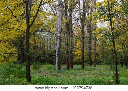 Changing colors of the forest. Autumn season landscape in the Tiszalok Arboretum in Hungary. Hungarian countryside.
