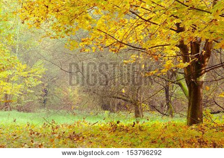 Changing colors of the forest. Vintage autumn season landscape in the Tiszalok Arboretum in Hungary. Hungarian countryside. Fallen yellow leaves.