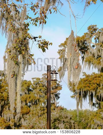 A lamp post with Spanish moss in the background