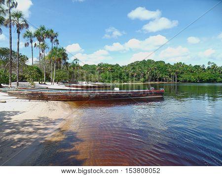 Tropical beach. tropical beach with palm trees on the coast of the Canaima lagoon, Venezuela