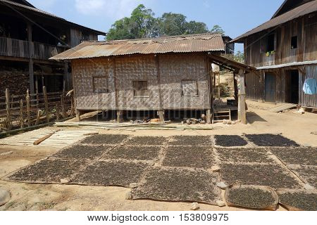 drying tea leaves in front of a hut in shan state, Kyaukme, Myanmar