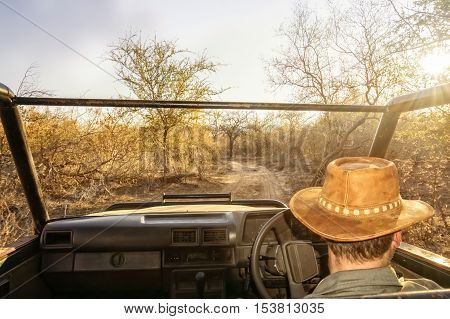 Ranger on a game drive steers his jeep along a dusty road. He looks for animals to show the tourists.