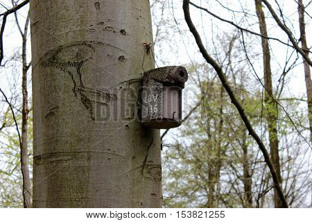 Nesting box for wild birds on the tree. Wooden nesting box hanging on tree in park.