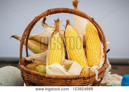 Ear of corn, revealing yellow kernels / photo of maize in a wicker basket