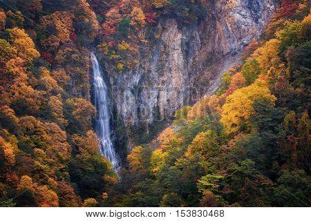 Kanman Falls pierce autumn's glory in Shigakogen in Nagano, Japan.