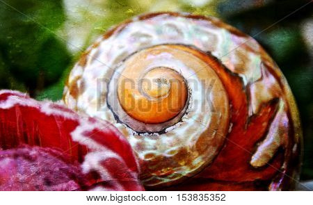 Still life with Protea blossom and Sea snail house