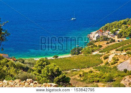 Vineyard and beach in picturesque village Farska bay island of Brac Dalmatia Croatia