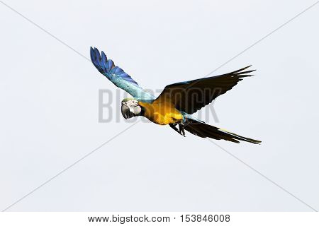 Parrot On White Sky Background In The Morning.