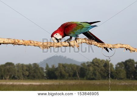 bird or parrot macaw on blue sky background.