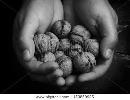 walnuts in hands shallow dof black and white