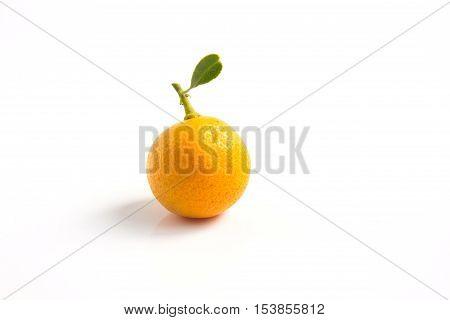 One orange Kumquat placed on whte background