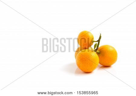 Group orange Kumquat placed on whte background