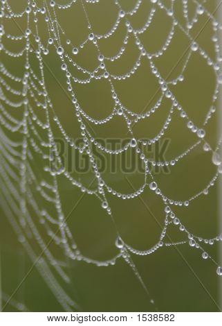 Spider'S Dewey Web