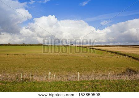 Grazing Pastures