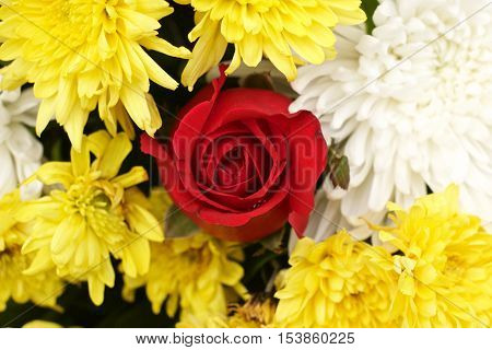 Red rose yellow spider chrysanthemum and white chrysanthemum flower mixed