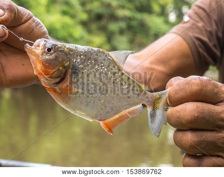 Fishing  The Piranha