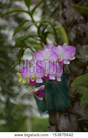 orchid,  view,  greed,  Closeup , garden,  pink, luxury