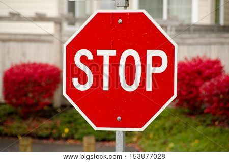 Stop Sign And Burning Bushes