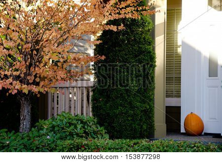 Sunny Highlights Of Halloween Motives In Seattle Suburb