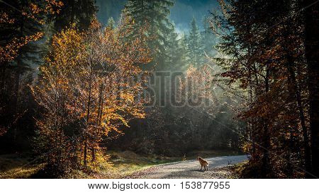 Trekking Path In An Autumn Day In The Alps