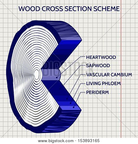 Sketch of wood cross section scheme on notebook background. Vector illustration
