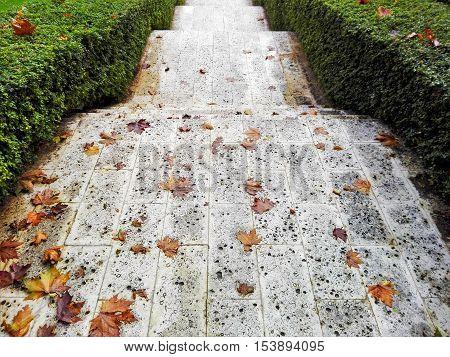 Photo of alley in the park, public garden.