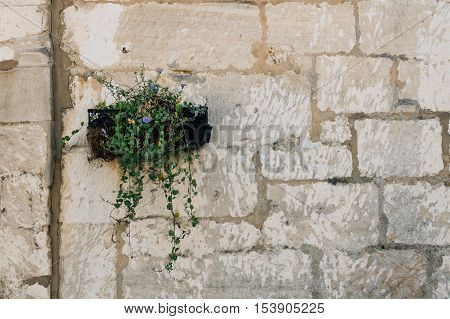 Planter with flowers in old stone wall. Space for copy