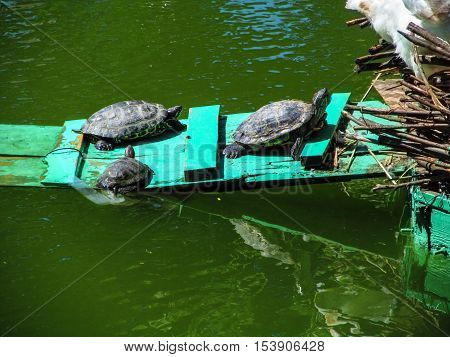The concept of united family. Family of three turtles one by one cohesively go home
