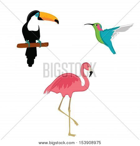 Exotic Birds Vector
