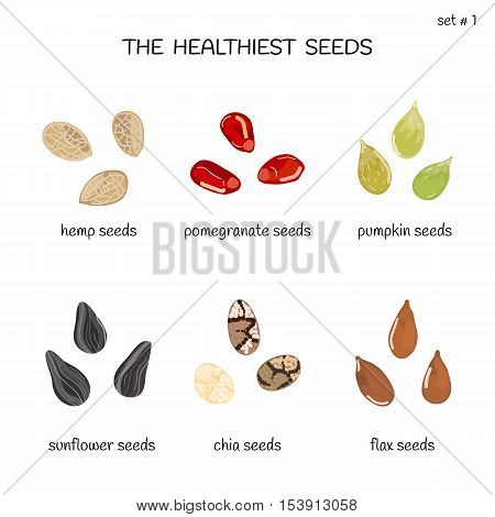 Collection of healthiest seeds with names including hemp, pomegranate, pumpkin, sunflower, chia and flax. Illustration in cartoon style.