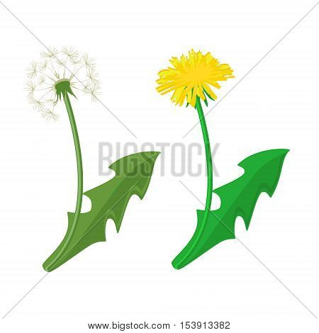 Dandelion Vector Icon