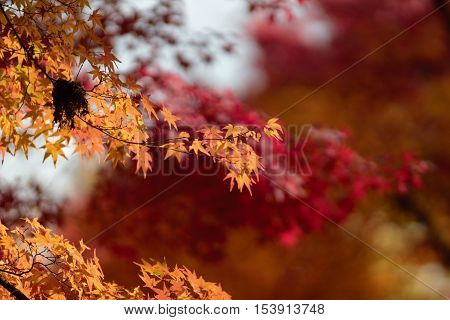 a fall season at Kyoto temple 2014