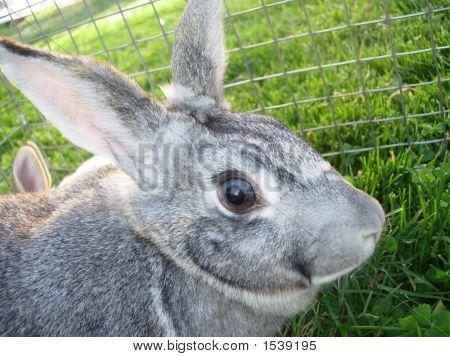 Mother Rabbit 2
