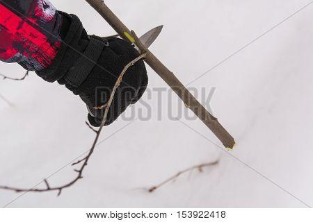 Pruning ornamental shrub branch with a garden secateurs in the summer garden