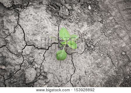 Plant struggling for life at drought land