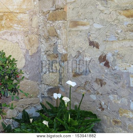 This is an image of flowers outside the Carmel Mission in Carmel, California taken on a bright sunny day.