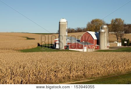 A red barn and silos on a Wisconsin farm surrounded by ripe corn fields.