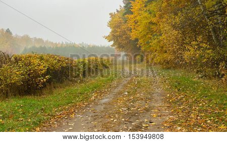 Autumnal landscape with sandy road in moist forest
