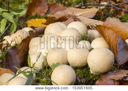 Mushrooms at the buttom of the forrest