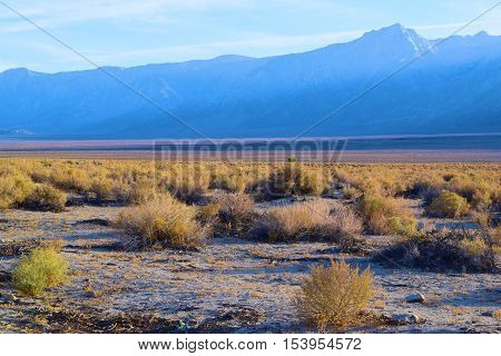 Sagebrush taken on the Great Basin Desert valley floor with the Sierra Nevada Mountains, CA beyond