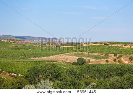 Vineyards In Haro, La Rioja, Spain