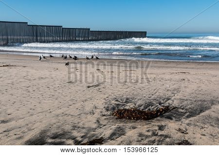 Seaweed on an empty beach at Border Field State Park, with the international border separating San Diego, California from Tijuana, Mexico in the background.